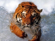 Wallpapers HD animales salvajes