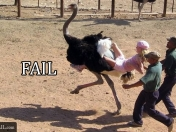 videos y fotos fails (parte4)+unas fotos de chuck norris