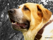 Wallpapers de Perros 3