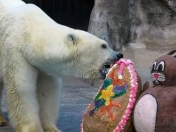 Por calor y pirotecnia murió el oso polar del Zoo de Bs As
