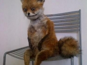 fails de taxidermia